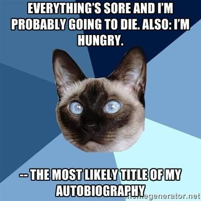 This Post Is Brought to You by Chronic Illness Cat (And Whinging)