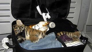 kebun binatang di dalam koper