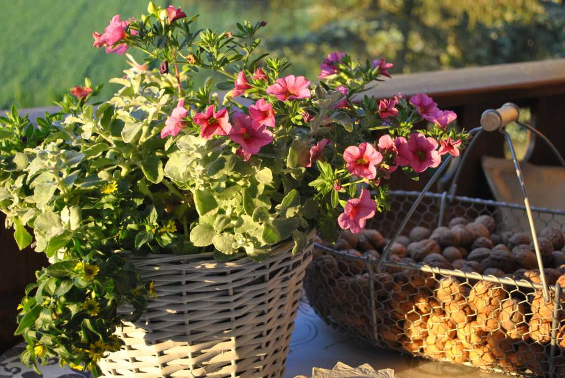 Gartendeko blog willkommen september for Herbstliche gartendeko