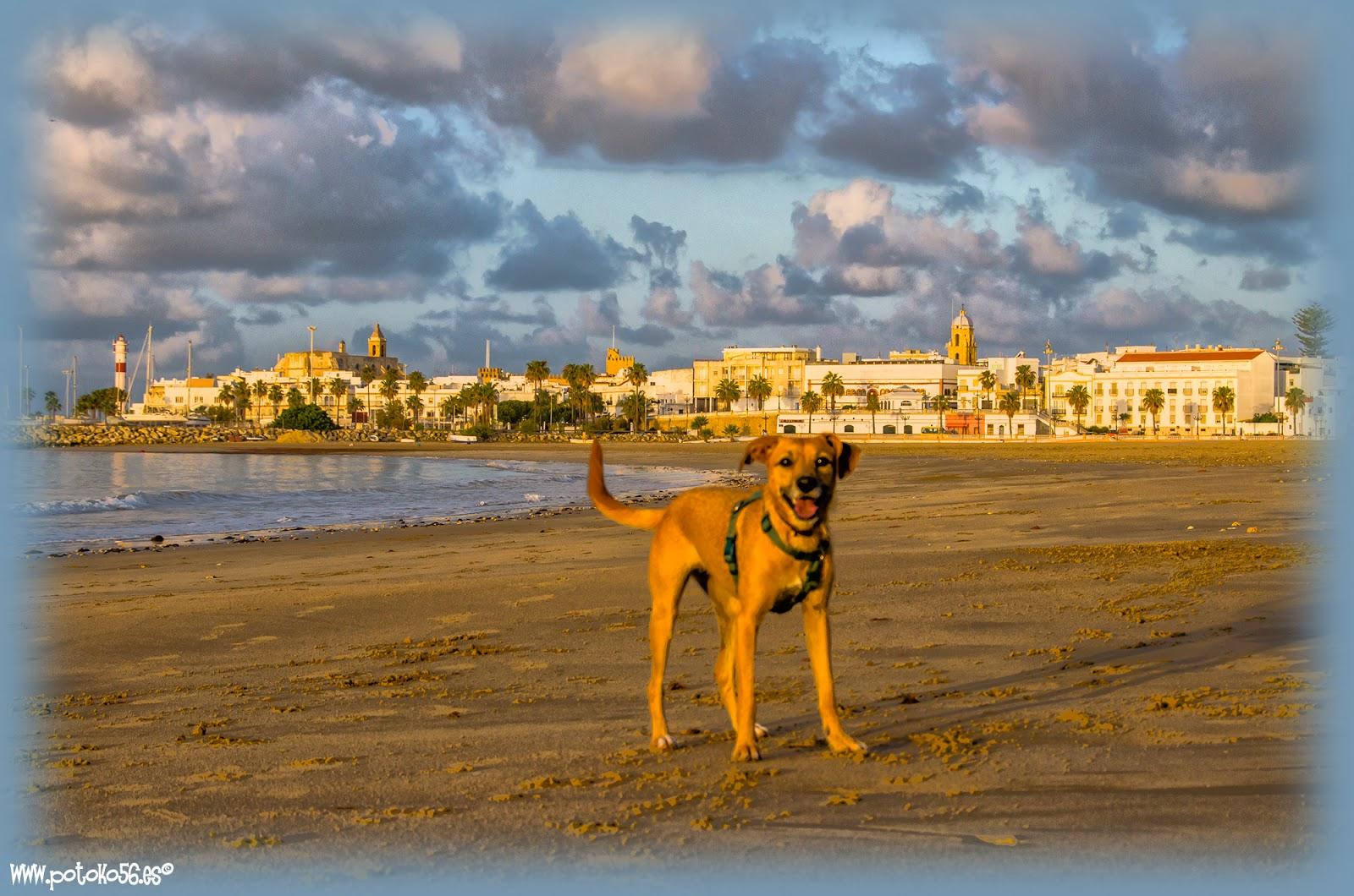 Un paseo por la Playa del Chorrillo en Rota con Lía nuestra perrita
