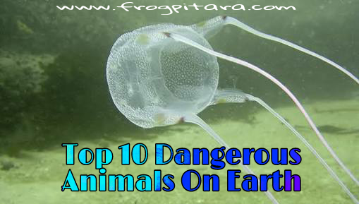 Top 10 Most Dangerous Animals On Earth