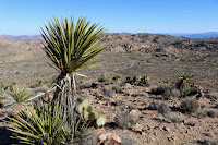 View east toward the Pine City Backcountry Board parking area and Desert Queen Mine from the east flank of Negro Hill, Joshua Tree National Park
