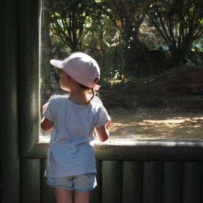 Phoebe looking at the tigers at Paradise Wildlife Park