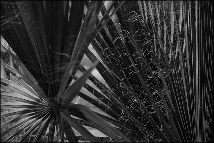 fotografía, palmeras, naturaleza, Límites, Fuente Álamo