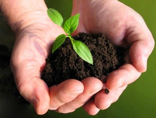 tips perlakuan benih sebelum disemai agar tanaman tidak mati