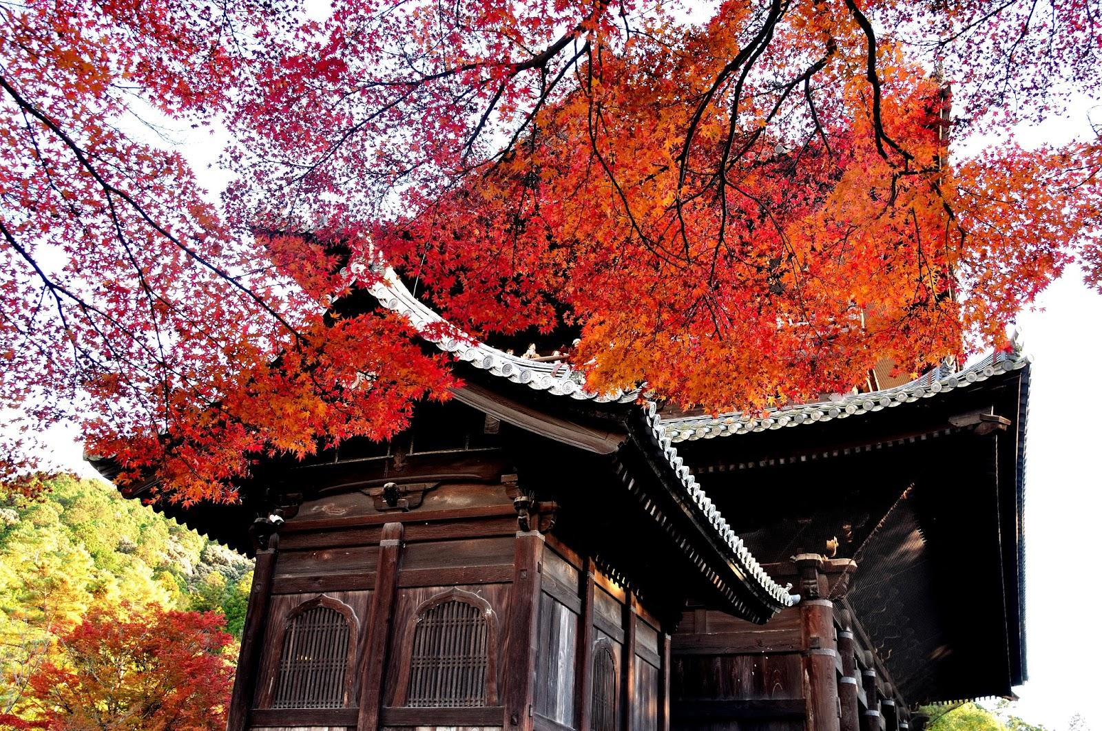 2017關西賞楓~京都東寺外圍、南禪寺