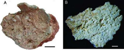 New type of dinosaur eggs from Early Cretaceous found in China