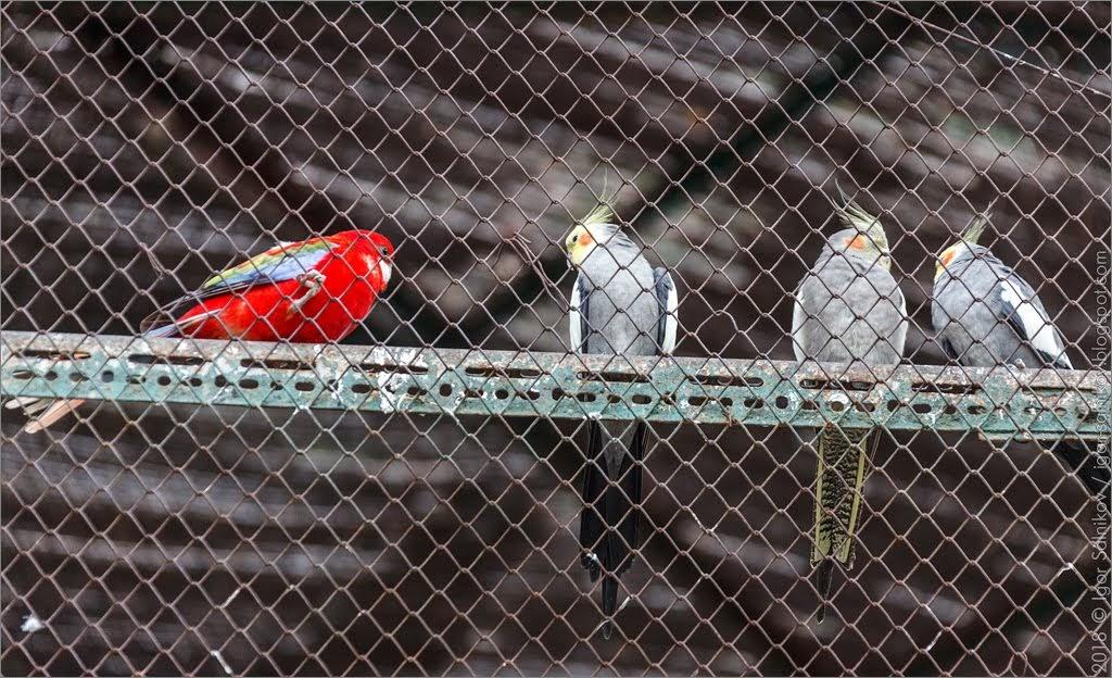 Греция Афины Национальный сад парк попугай