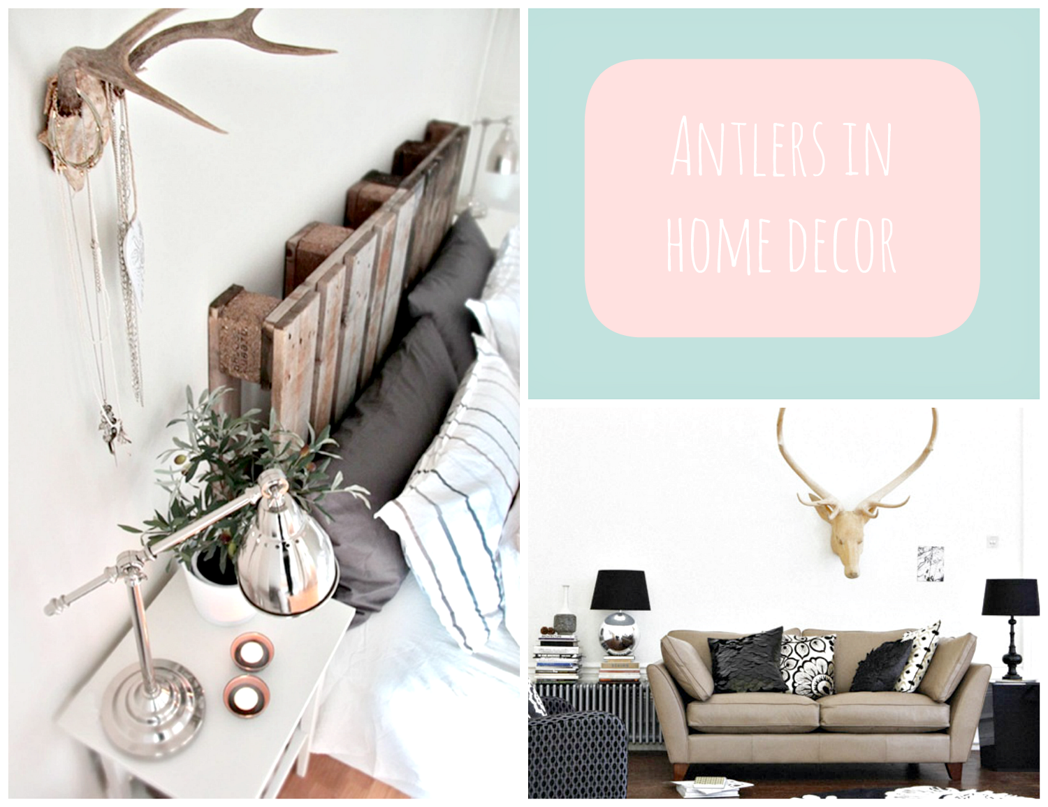 antlers in home decor