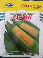 benih jagung prima,prima,jagung prima,benih jagung manis,budidaya jagung,budidaya jagung manis
