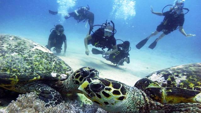 ท่องเที่ยว, แนวหินปะการัง, มัลดีฟส์, สถานที่ดำน้ำ, สถานดำน้ำทั่วโลก, อันดับสถานที่ดำน้ำ, เกาะกีลี อินโดนีเซีย (Gili Islands, Indonesia)