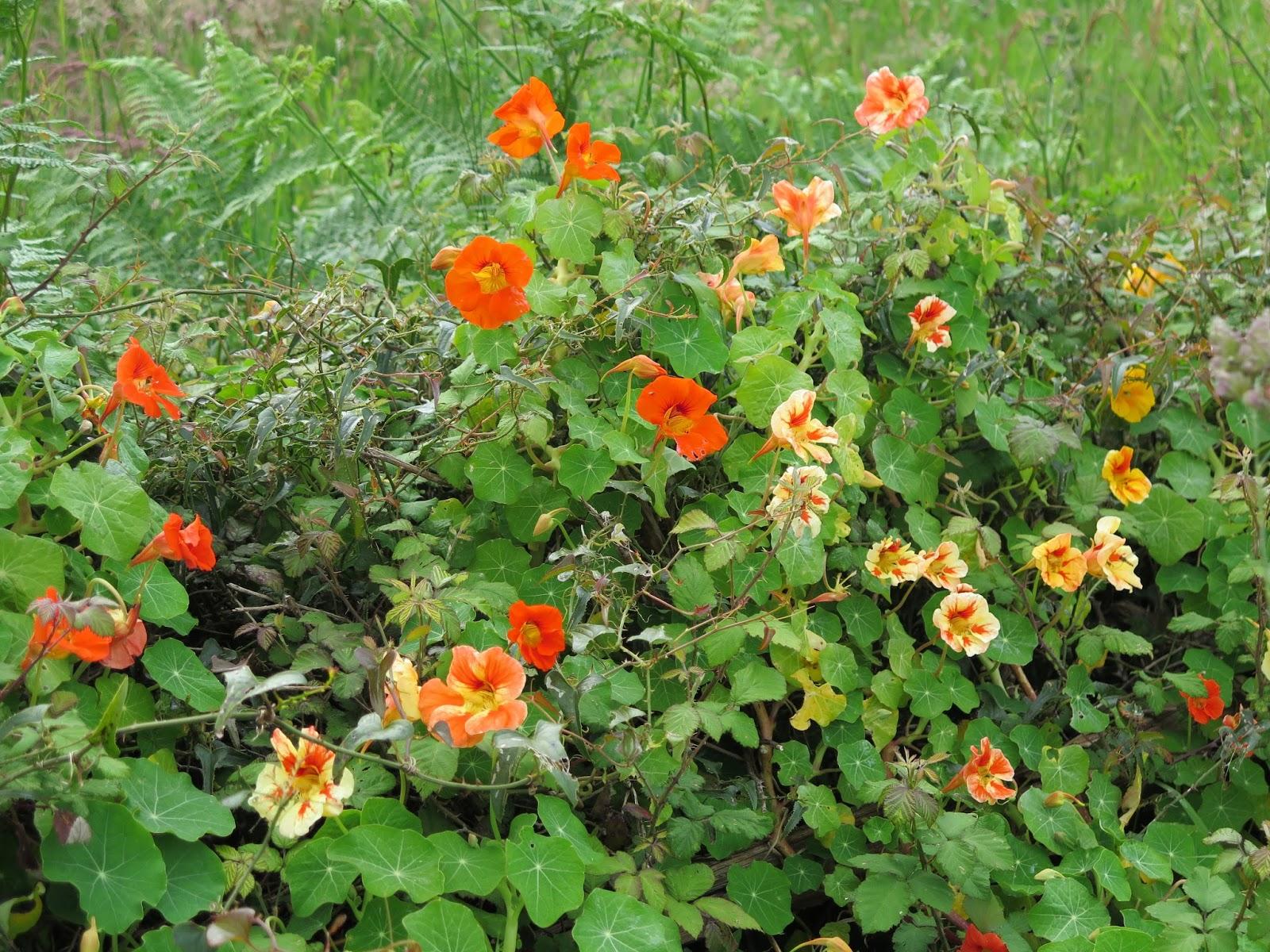 Excelente Uñas De Flores Silvestres En Polvo De Cromo Galería ...