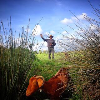 José Acosta Sierra es un cabrero andaluz.  Una persona privilegiada que todavía tiene la libertad de vivir cerca de la naturaleza.  Su lugar de trabajo tiene como techo  el cielo y sus vistas dan a las montañas  de la Sierra de Cádiz.