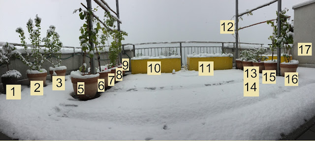 Genussbalkon im Schnee