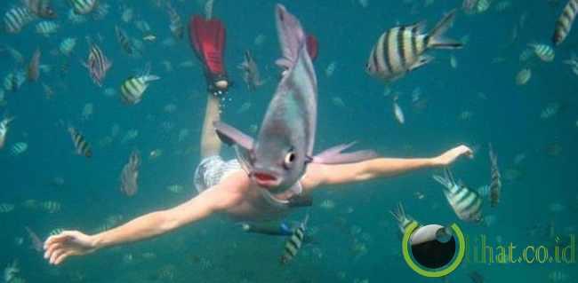 Kepala Ikan