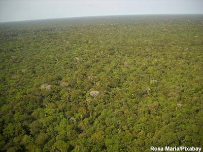 Amazônia, floresta, floresta amazônica, floresta tropical, amazon forest, amazon, forest, desmatamento, savanização, mudança climática, clima, desmatamento amazônica, amazonia