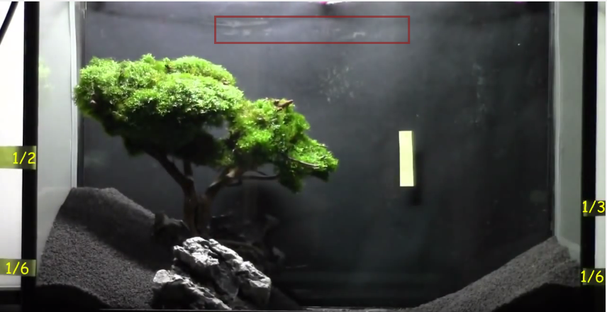 hướng dẫn làm hồ thủy sinh bon sai cấy rêu - cho cây bon sai vào