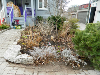 Leslieville Toronto Spring Front Yard Cleanup After by Paul Jung Gardening Services--a Toronto Gardening Company