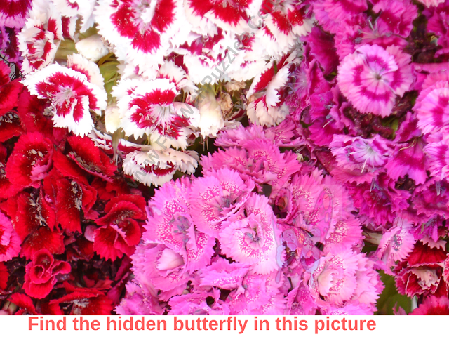 Hidden Butterfly Picture Puzzle