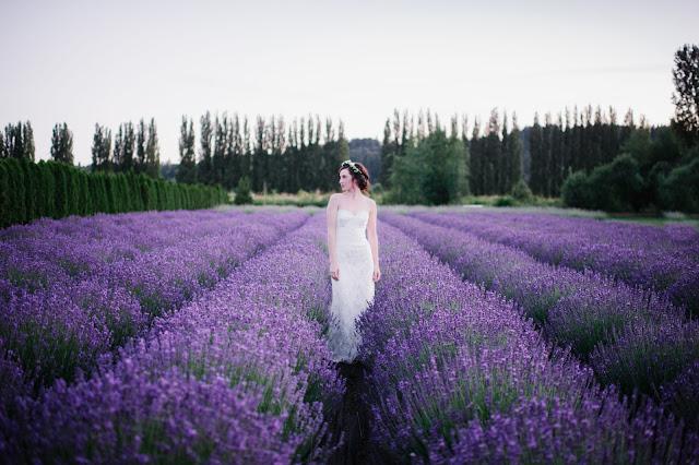 cánh đồng hoa oải hương đẹp nhất thế giới 32