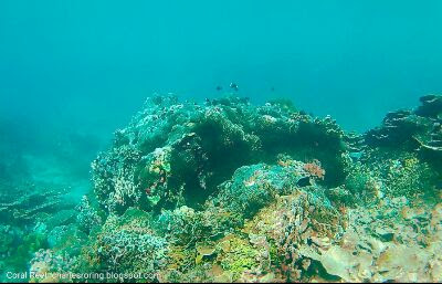 Snorkeling tour in West Papua of Indonesia with Charles Roring