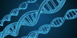 الجينات المسؤولة عن زيادة الوزن