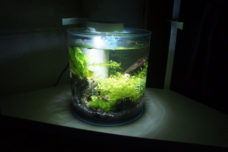 Who Else Wants to Learn About Betta Fish Tank Ideas?