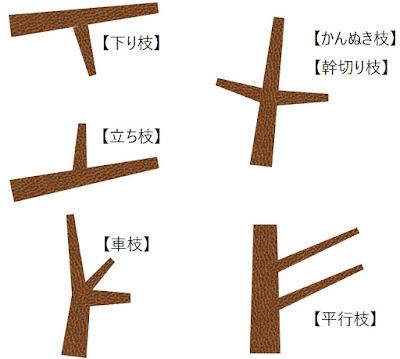 盆栽の剪定での忌み枝の説明図