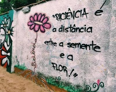 Grafite: paciência é a distância entre a semente e a flor.