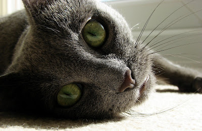 Cat Poisoning Symptoms Every Owner Should Know