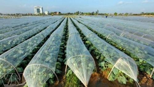 Kỹ thuật trồng rau trái vụ