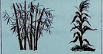 Perhatikan gambar tumbuhan berikut! Nama kelas dan ciri ...