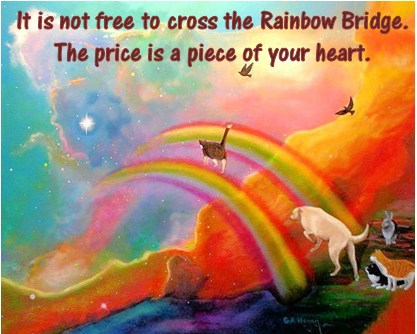 It is not free to cross the Rainbow Bridge meme