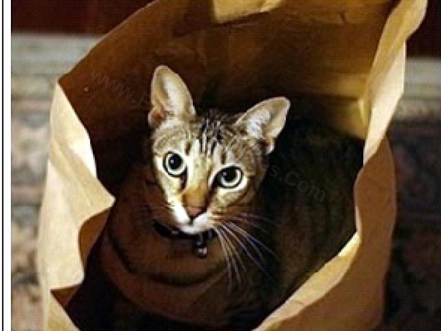 Rebus Engish Idiom Quiz-Cat