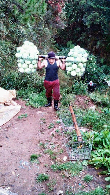 Another man from the Mt. Province who was tagged as 'Cabbage Man' has captured the hearts of the netizens!