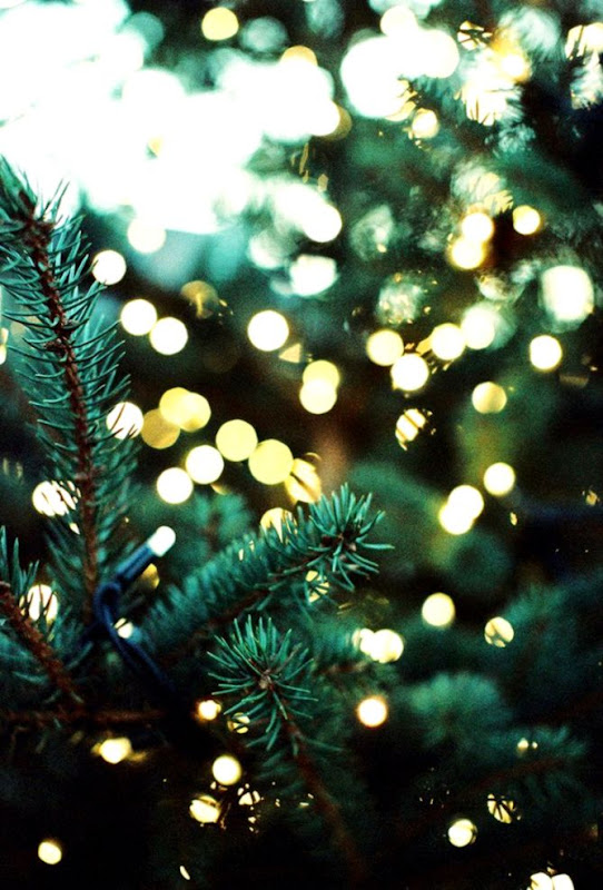 fb38c0dcaa3 Pine Trees   Lights Photography Pinterest Christmas