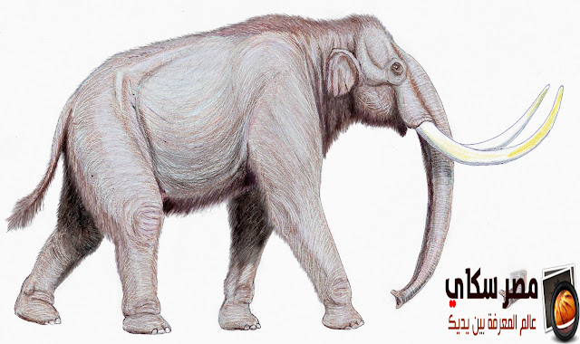 ماذا تعرف عن حيوان الماموث Mammuthus