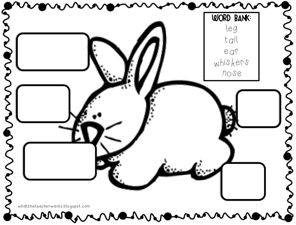 What the Teacher Wants!: And Then I Brought a Rabbit to
