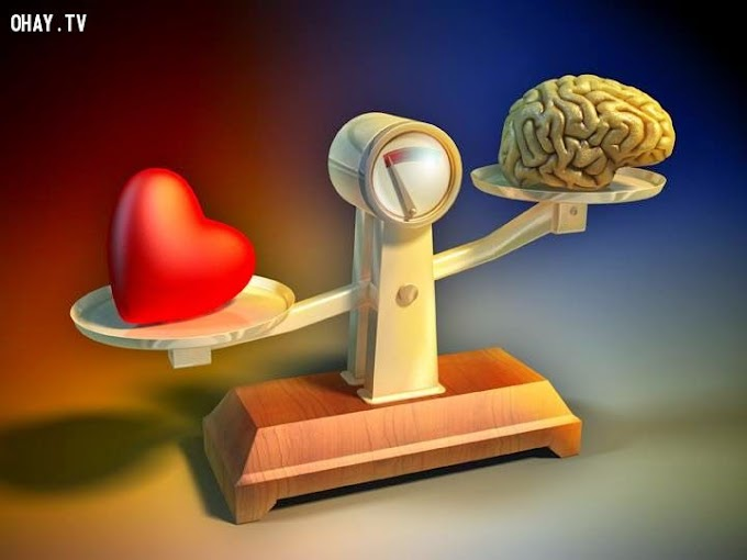 Osho - Bạn thuộc kiểu người nào: tình cảm hay trí tuệ?