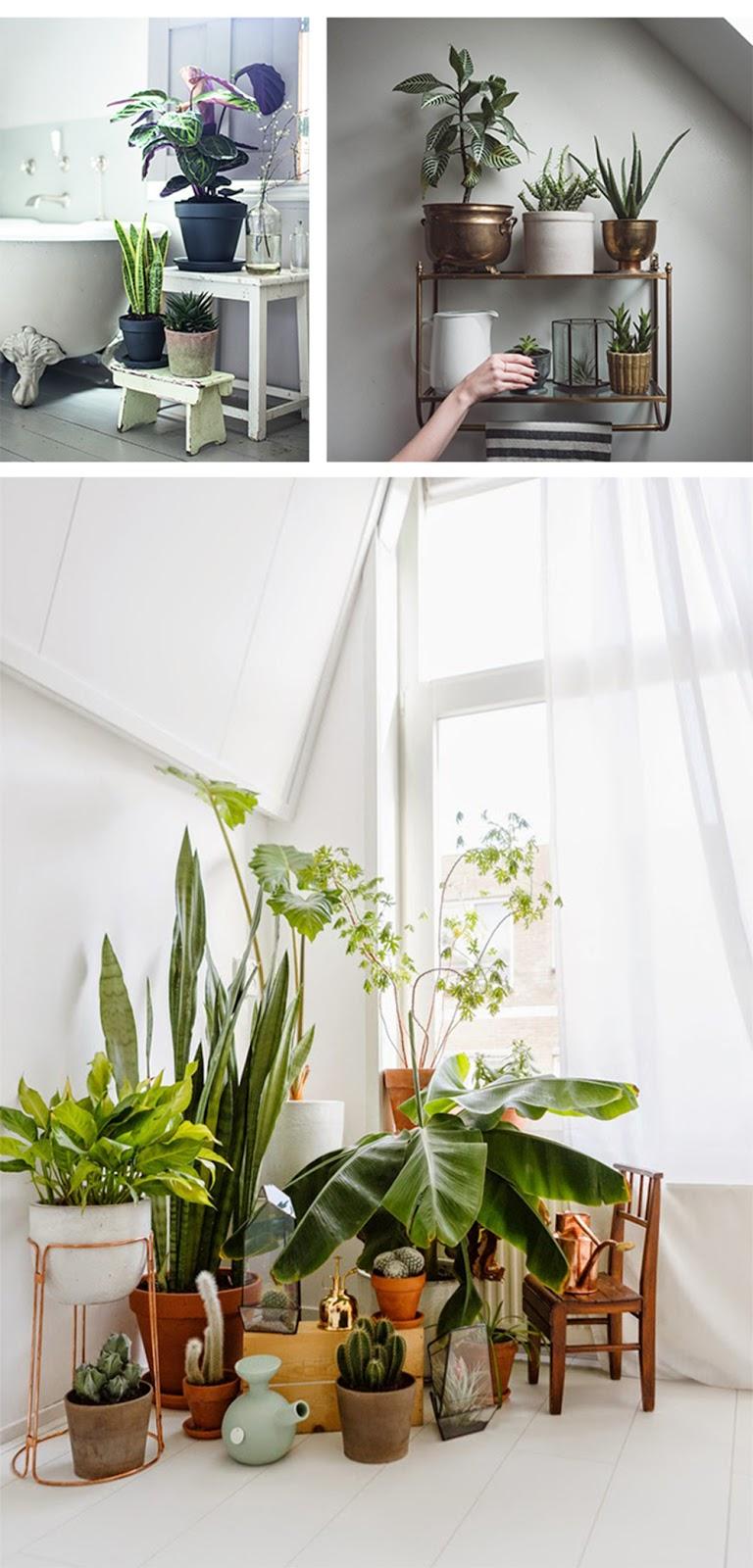 piante per interni con luce filtrata