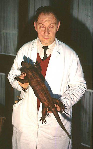 Resultado de imagen de hoplodactylus delcourti