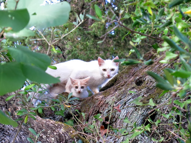 white wild cat and kitten in Corfu, Greece