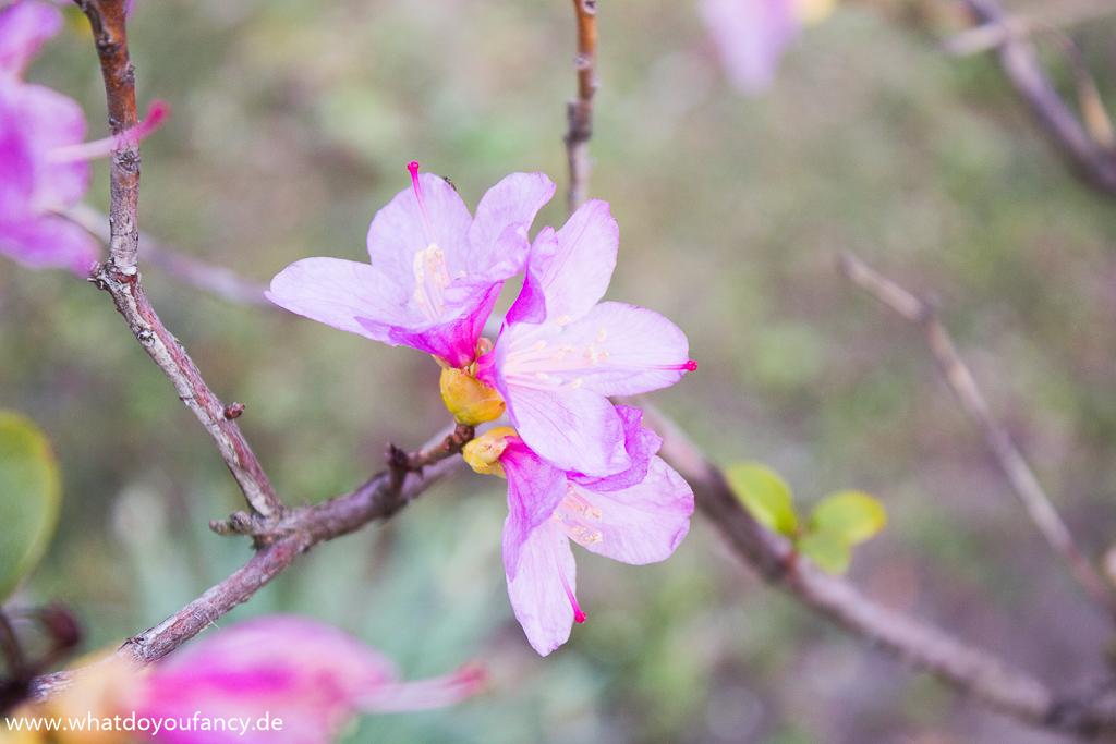 Fotografisch durch die Jahreszeiten Fruehling