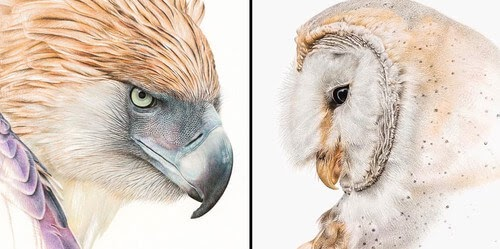 00-Martin-Aveling-Animal-Portraits-in-HD-drawings-www-designstack-co