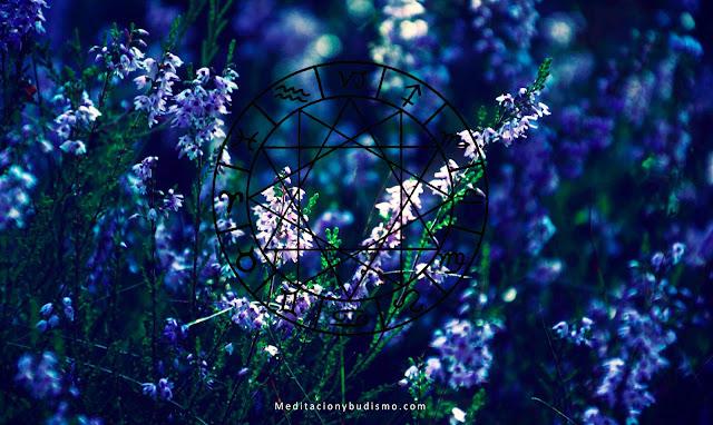 Según tu fecha de nacimiento debes saber el mensaje que esta flor te representa