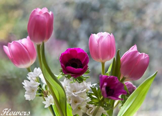 To Best Friend         Very Good Morning Goodmorning Image Flower