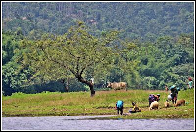 Bichanakandi, Pangthumai, Ratargul, Sylhet, Beautiful Bangladesh, বিসানাকান্দি, Trip Navigation Bangladesh