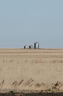 Prairie Standouts.