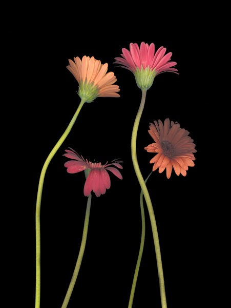 http://heather-kirk.artistwebsites.com/featured/4daisies-on-stems-heather-kirk.html