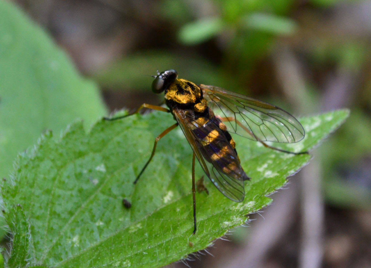 Fly Creteil Lit Fly Woods Walks And Wildlife June With Lit Fille Fly